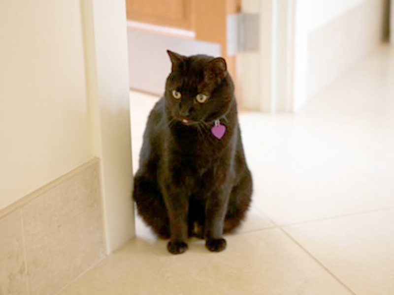 AgeSong-SanFrancisco_Cat.jpg